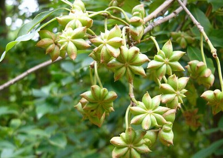 1 генеративный орган содержащий семена 2 видоизмененные