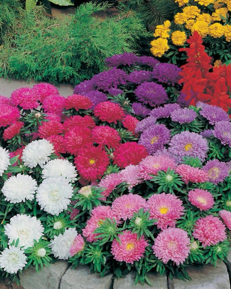 Картинки спасибо за цветы любимый особый